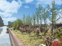 团结河道景观图